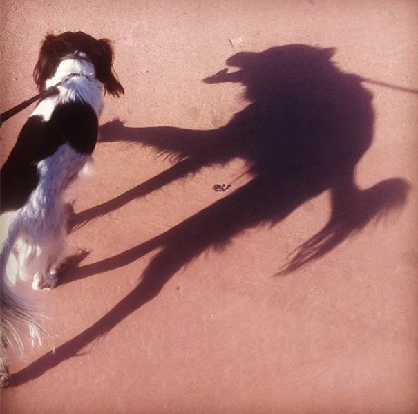 سایه سگ همانند گرگ درنده شده