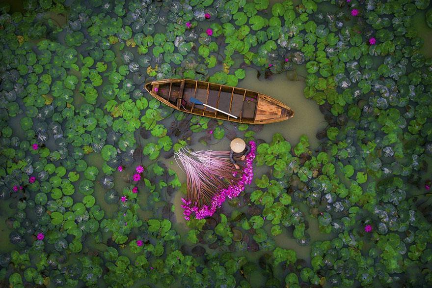 نیلوفر آبی - ویتنام (مردم - رتبه دوم)