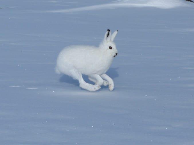 اگر به خرگوش های معمولی امتیاز 10 از 10 به لحاظ با نمک بودن بدهیم، این خرگوش ها 11 از 10 هستند.