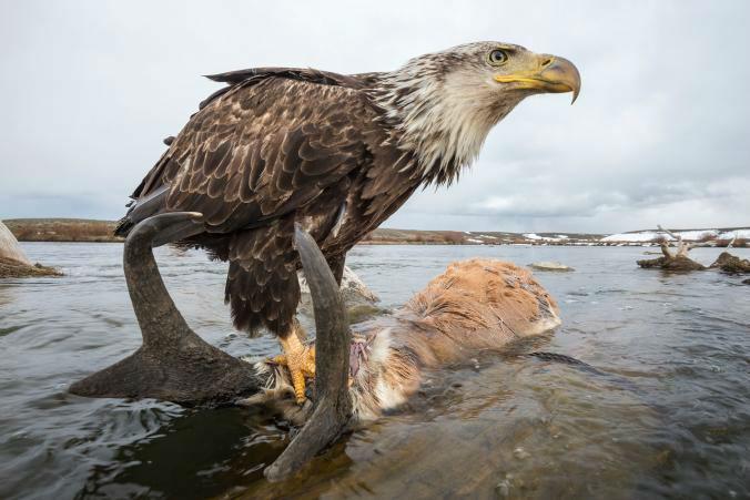 14-Best-Animal-Gallery-MM8340_140511_03117.ngsversion.1481027455539.adapt.676.1-w700