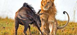 ۹ شکارچی طبیعت که بیرحمانه ترین و ترسناک ترین تکنیک های شکار را دارند