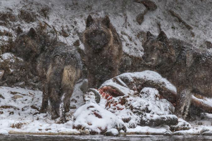 16-Best-Animal-Gallery-NationalGeographic_2384845.ngsversion.1481027449267.adapt.676.1-w700