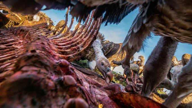 18-Best-Animal-Gallery-NationalGeographic_2340482.ngsversion.1481037946109.adapt.676.1-w700