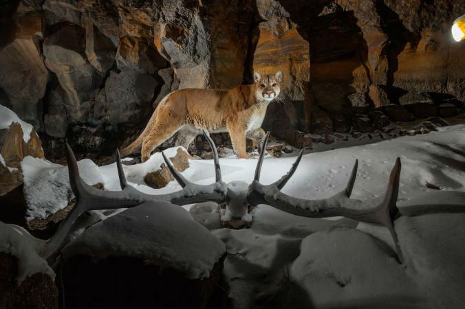 19-Best-Animal-Gallery-NationalGeographic_2384844.ngsversion.1495123215862.adapt.676.1-w700
