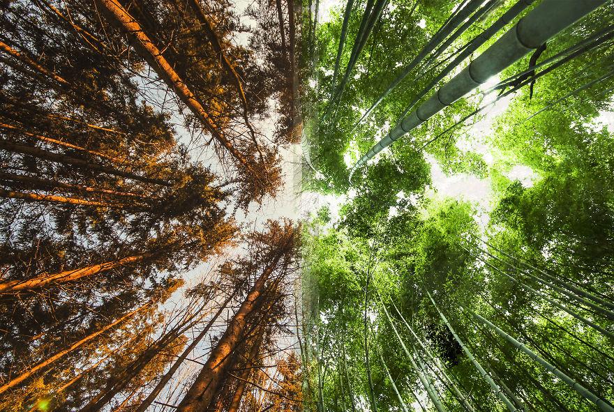 جنگل در نروژ / جنگل در ژاپن