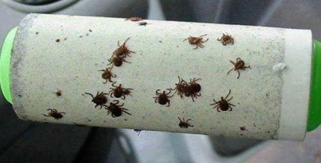 وقتی بیرون از خانه و در دل طبیعت هستید، حشرات زیادی روی لباس، پتو، زیرانداز و درون چادر مسافرتی مشاهده خواهید کرد. برای اینکه به راحت ترین روش از دست همه آن ها خلاص شوید، فقط کافیست از رول های چسبی استفاده کنید. این رول ها که برای زودن پرز از روی لباس کاربرد دارند را موقع پیک نیک با خود ببرید و به عنوان شکارکننده ی حشرات از آن بهره بگیرید.