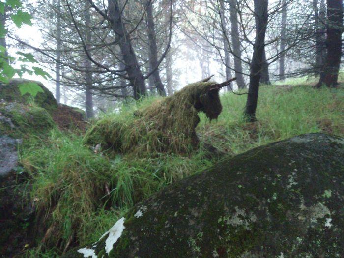 علف ها و خزه های رشد کرده روی تخته سنگی در جنگل، تصویری شبیه اسب تک شاخ را تداعی می کنند.