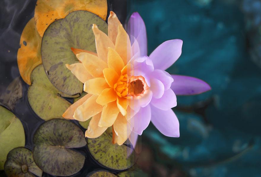 باغ گل سیدنی در استرالیا / باغ گل بالی در اندونزی