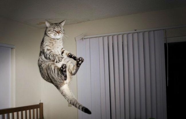 306905-funny-jumping-cats-102__880-650-b3d03b0eb8-1484634044-w700