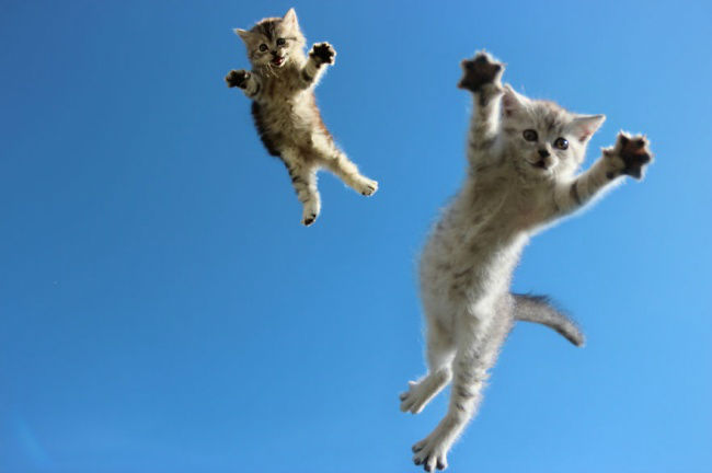 306955-funny-jumping-cats-103__880-650-18281bccca-1484634044-w700