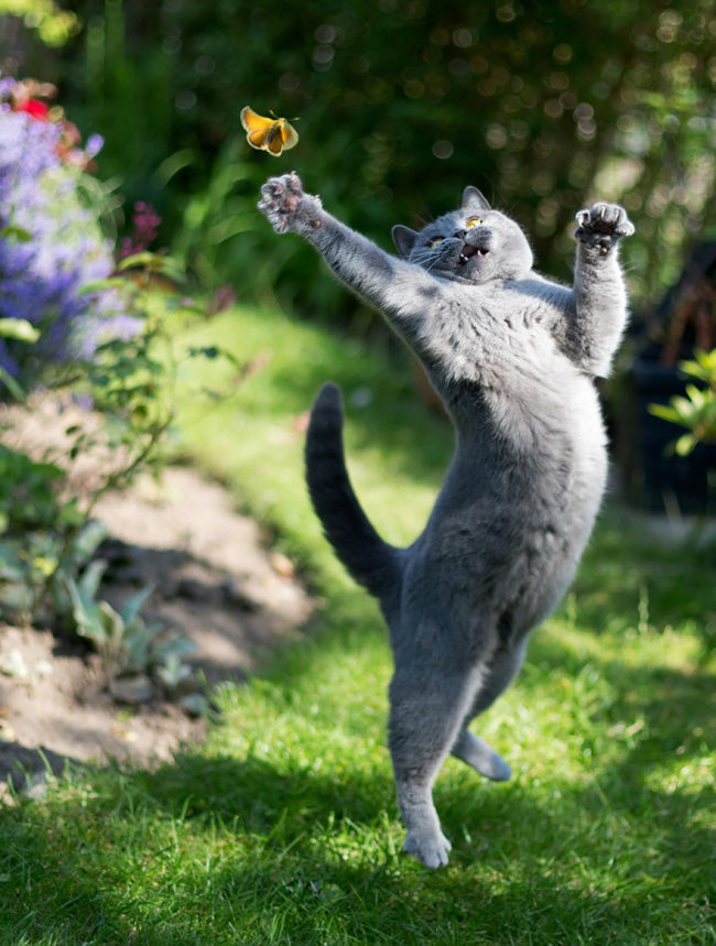 307055-funny-jumping-cats-51__880-650-8d3572accc-1484634044-w700