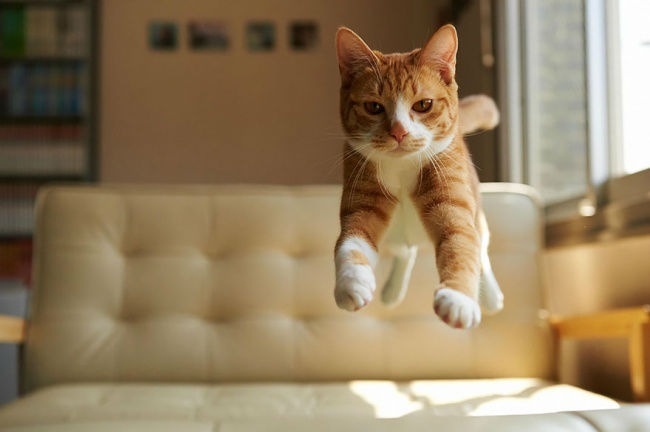 307105-funny-jumping-cats-71__880-650-55243fd14f-1484634044-w700