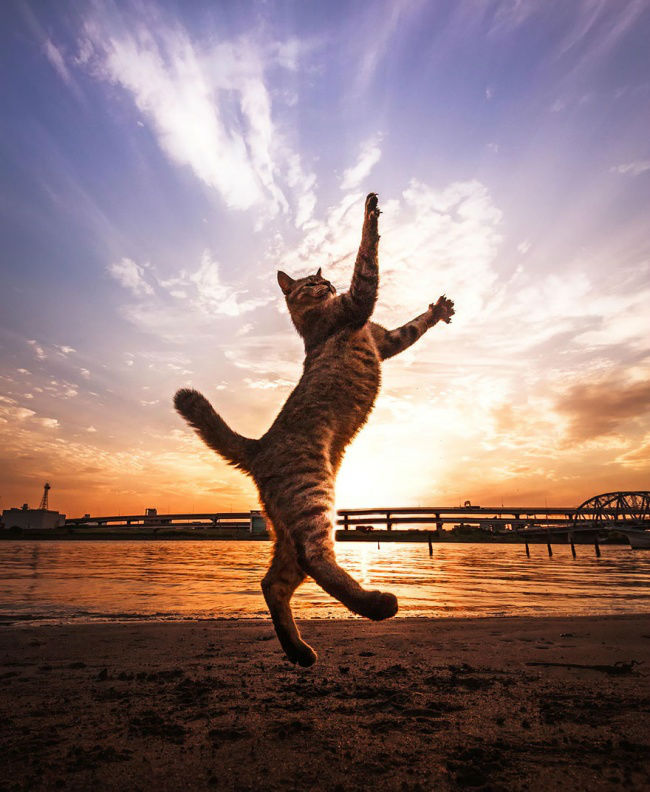 307155-funny-jumping-cats-91__880-650-ea4c2a9df3-1484634044-w700