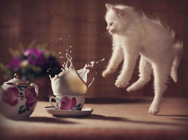 صحنه های جالب و خنده دار از گربه ها که در بهترین زمان ممکن شکار شده اند
