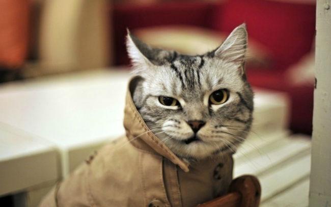 614455-Funny-Cat-650-6b4dd1057f-1484645312-w700