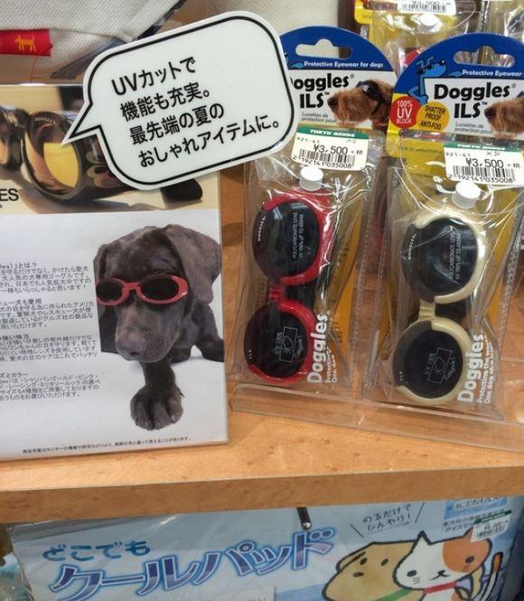 شاید این وسیله به نظرتان عجیب باشد اما باید بدانید که نور آفتاب چشمان سگ ها را نیز همانند انسان، اذیت می کند. به همین خاطر، ژاپنی ها برای سگ های خانگی این وسیله را اختراع و تولید کرده اند.