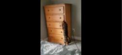 ویدئوی جالبی از قایم باشک بازی گربه در خانه [تماشا کنید]