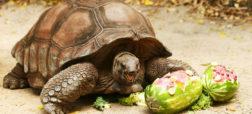 با ۱۱ گونه جانوری آشنا شوید که بیشترین میزان طول عمر را به خود اختصاص داده اند