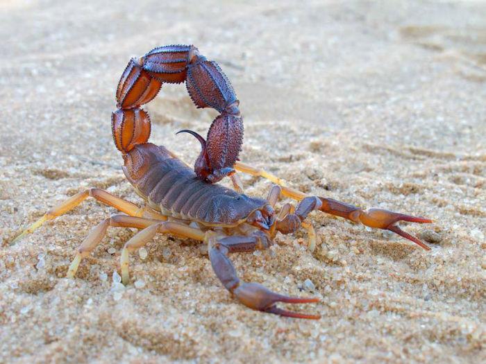 scorpion.jpg.838x0_q67-w700