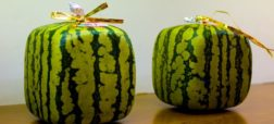 two_square_watermelons.jpg.838x0_q80