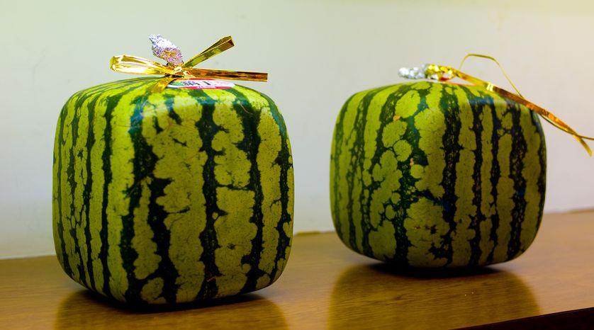 چرا ژاپنی ها هندوانه ها را به شکل مکعب پرورش داده و عرضه می کنند؟
