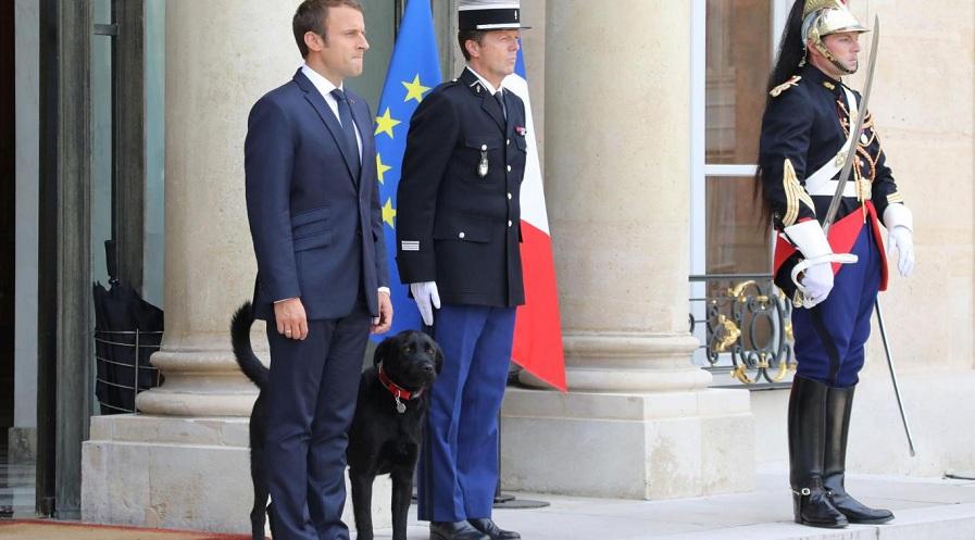 نگاهی به تصاویر سگ های جذاب و قابل تحسین ۷ رهبر جهان