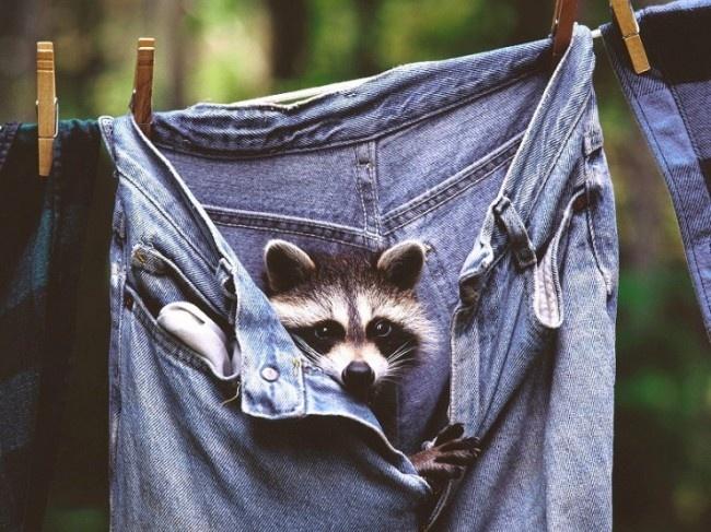 به نظرت این جین اندازه ام می شه؟