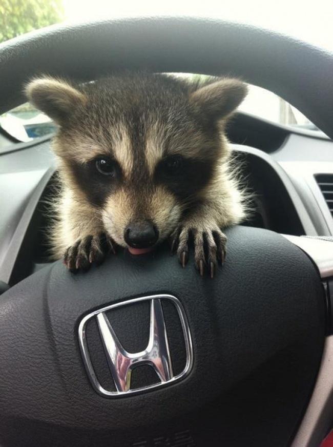 می شه منم رانندگی کنم؟
