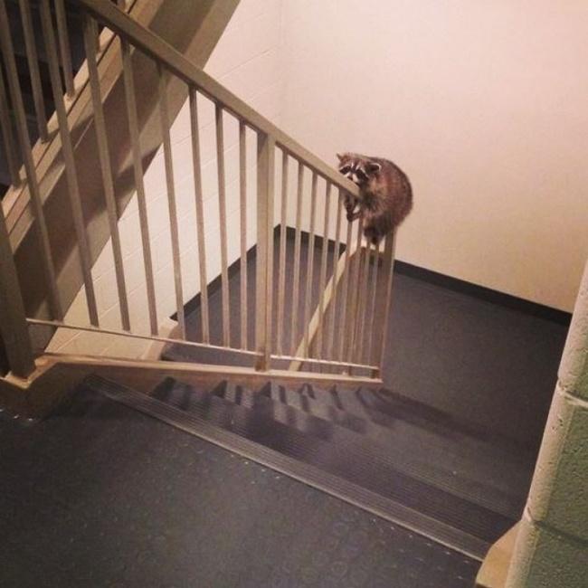 اه! دوباره آسانسور خرابه