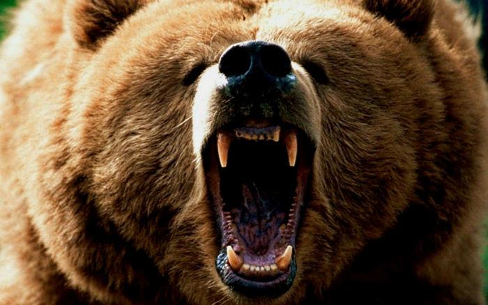 با ۱۰ جانوری آشنا شوید که بیشترین قدرت آرواره را به خود اختصاص داده اند