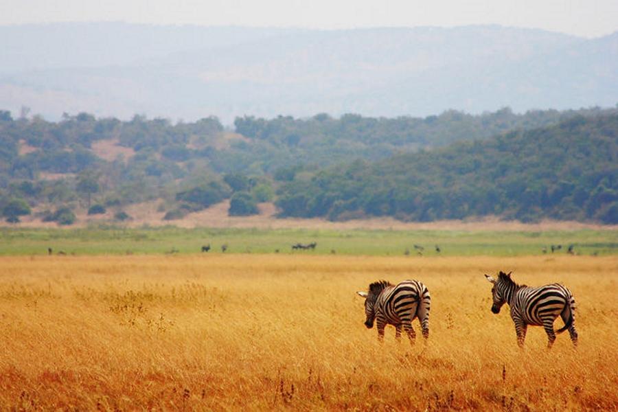 پارک هوشمند؛ استفاده از تکنولوژی پیشرفته در پارک های حیات وحش آفریقا برای مبارزه با شکارچیان