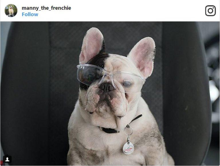 «سگ»هایی که در اینستاگرام بیشتر از من و شما درآمد دارند
