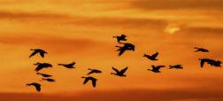 ویدیویی دیدنی از الگوهای مهاجرتی حیات وحش در سراسر دنیا [تماشا کنید]