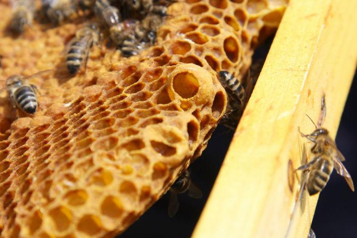 4583832484 4d8d54298c b1 w700 - زندگی زنبورهای عسل؛ ۱۰ واقعیت جالب و باورنکردنی در مورد زنبورهای عسل که نمی دانستید