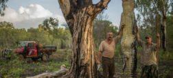 مشاهدات جالب یک عکاس از پرورش و شکار کروکودیل آب شور در مناطق شمالی استرالیا