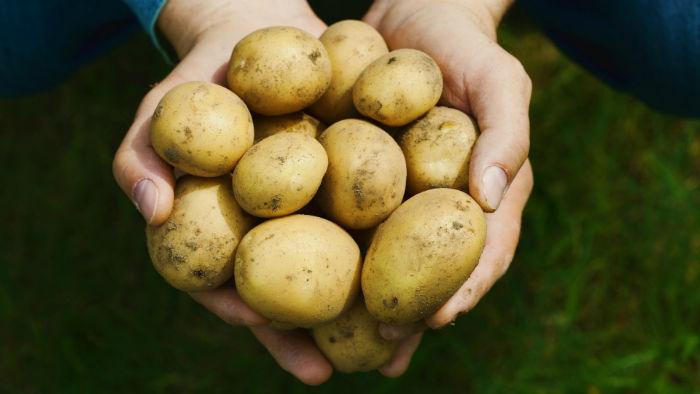 آیا سیب زمینی می تواند تمامی مواد مغذی لازم برای بدن را تامین نماید؟
