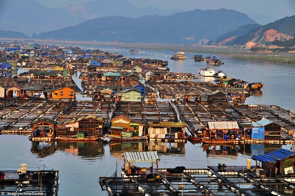 مزارع شناور و قفس های دریایی پرورش ماهی در کشور چین