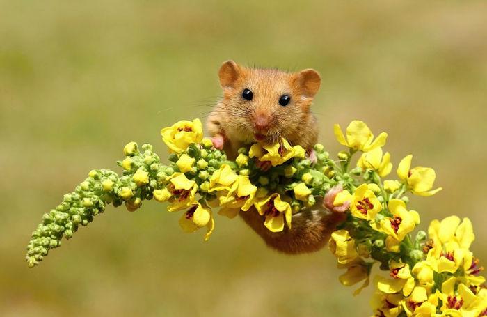 نکاتی جالب و باورنکردنی در مورد موش ها که شاید نمی دانستید