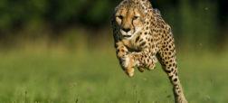 با ۷ گونه از سریع ترین جانوران روی کره زمین آشنا شوید