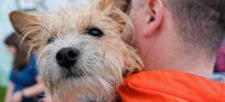 سگ های خانگی به عمر صاحبان خود می افزایند