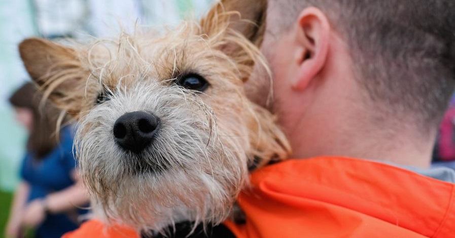 دانشمندان سوئد می گویند سگ های خانگی به عمر صاحبان خود می افزایند