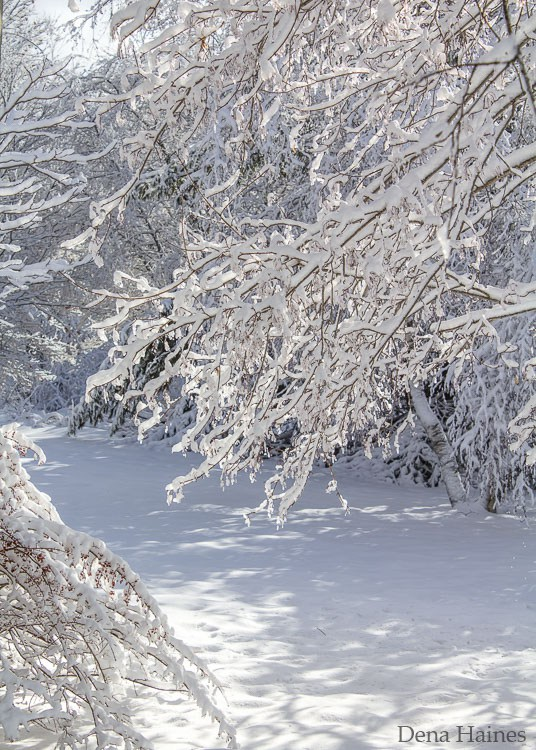 ترفندهای عکاسی در برف