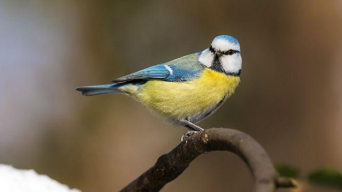 آیا گونه های مختلف پرندگان می توانند با یکدیگر صحبت کنند؟