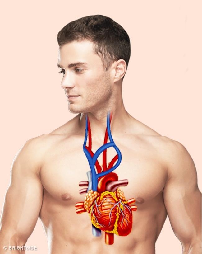 دانستنی های پزشکی که شاید روزی موجب نجات جان شمابشوند