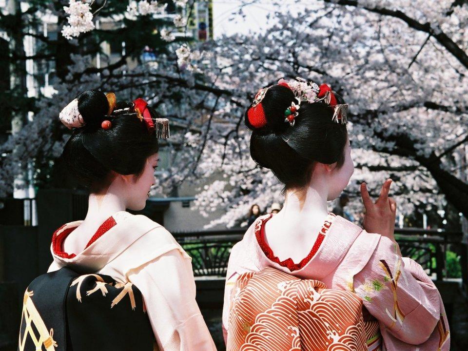 بهترین مکانهای دنیا برای تماشای شکوفههای گیلاس کجاست؟