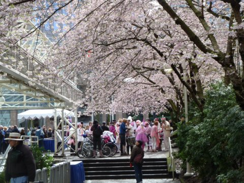 بهترین مکان های دنیا برای تماشای شکوفه های گیلاسکجاست؟