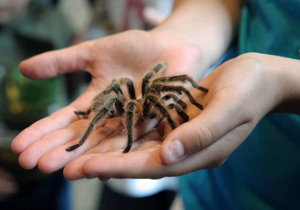 سمی ترین و خطرناک ترین عنکبوت های جهان