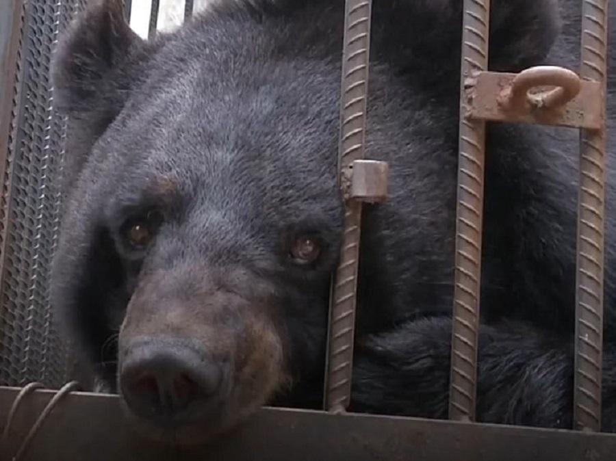 ماجرای عجیب سگی که به خرس سیاه آسیایی تبدیل شد