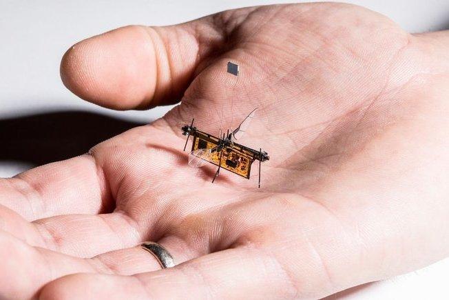 حشره رباتیک روبوفلای