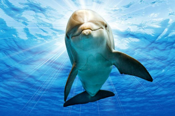 تجربه خاص تماشای دلفینها در برج میلاد [رپورتاژ آگهی]